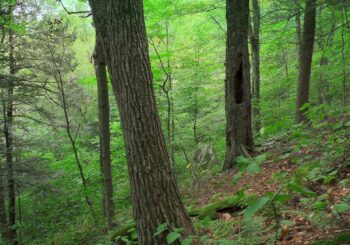 Deep Dialogue Highlights Forest Protection